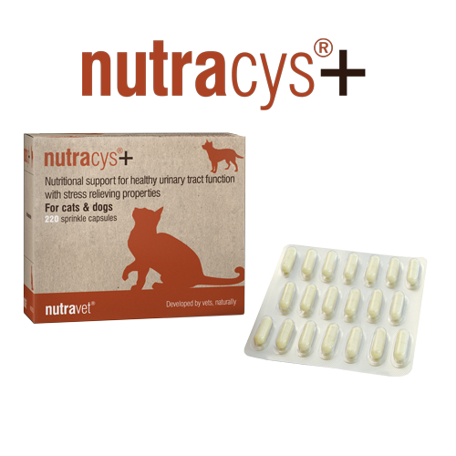 UTI supplements for cats