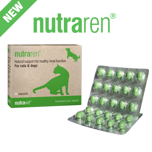 Best supplement for dogs with itchy skin