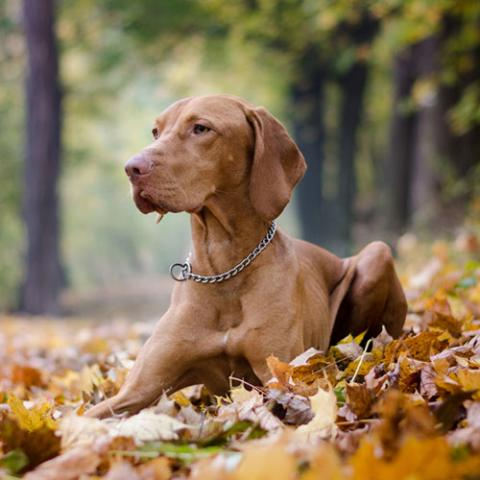 Top tips for pet owners during autumn
