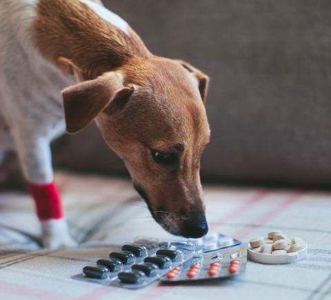How to administer capsules and tablets to your cat or dog