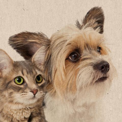 L-Tryptophan for dogs and cats