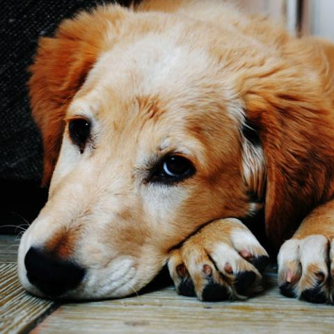 Signs of stress in dogs & cats, Signs of anxiety in dogs & cats