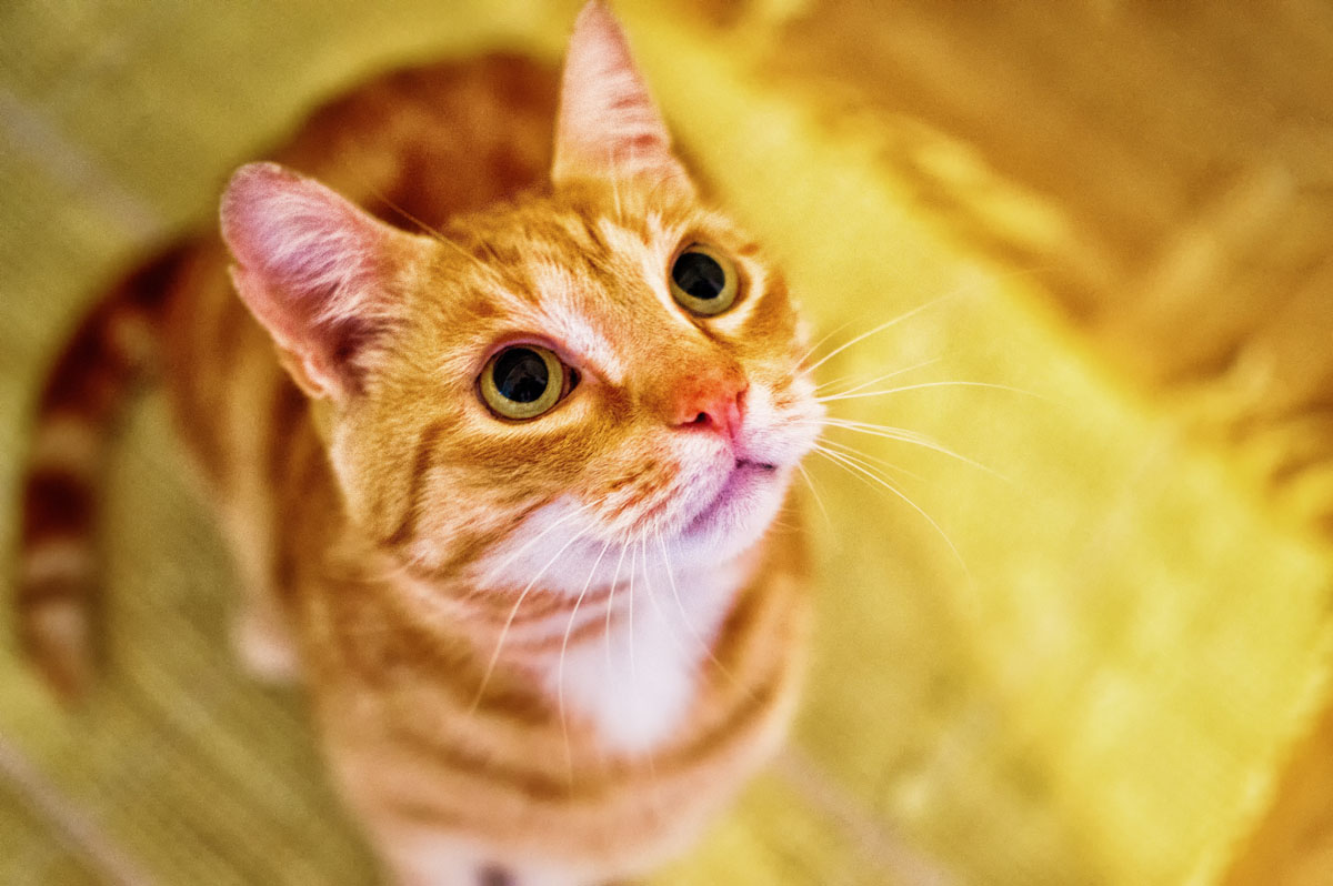 urinary tract health in cats