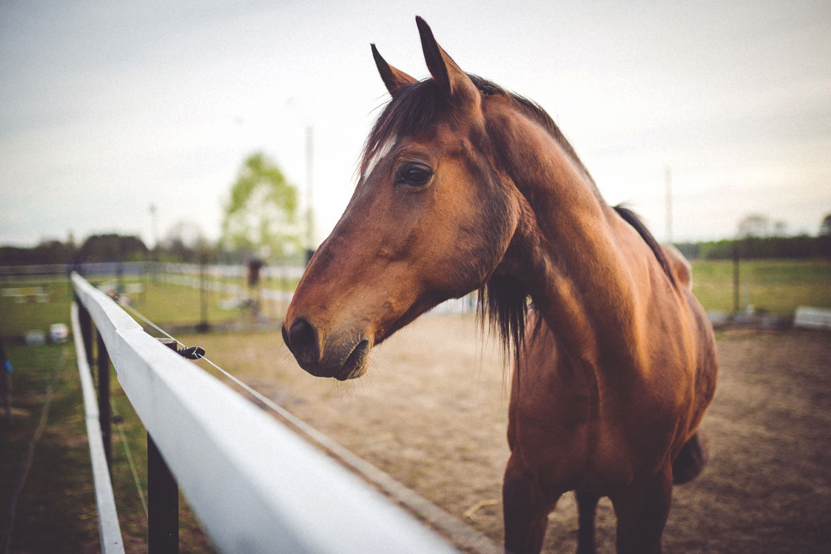 pictures How to Keep a Horse Calm While Riding