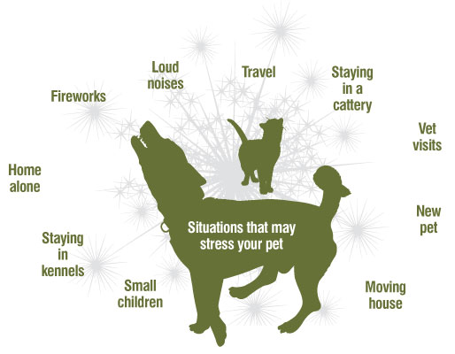 Calming tablets for dogs and calming supplements for dogs diagram