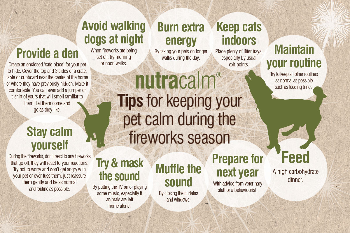 Tips for keeping your pet calm during the fireworks