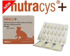 nutracys plus for cystitis in cats