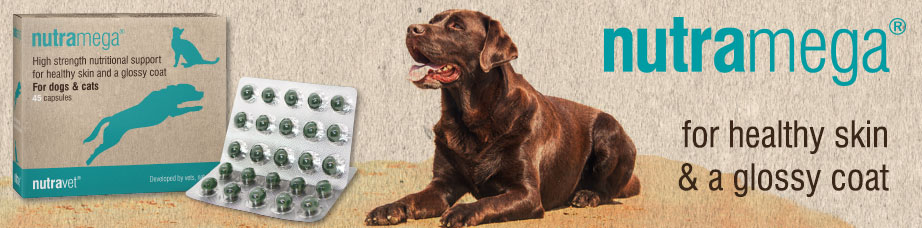 Image of Itchy dog supplements and supplements for skin health in dogs