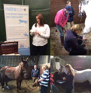 Nutraquin for horses presentation